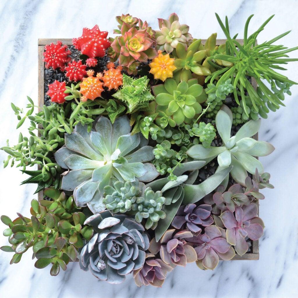"""Succulents"