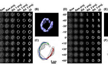 Video: Researchers Produce the First High-Quality 3-D Images of an Individual Protein