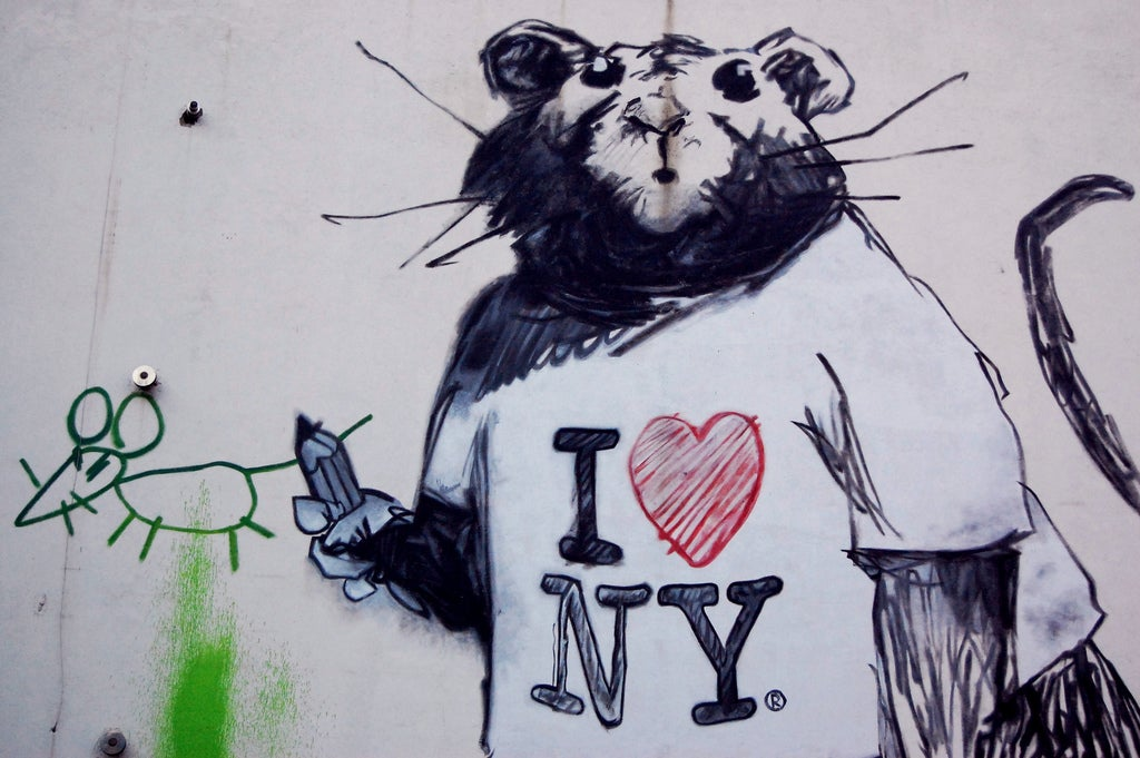 What Do NYC's Rats Get Up To When We Aren't Watching?