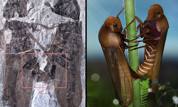 These Two Insects Have Been At It For 165 Million Years