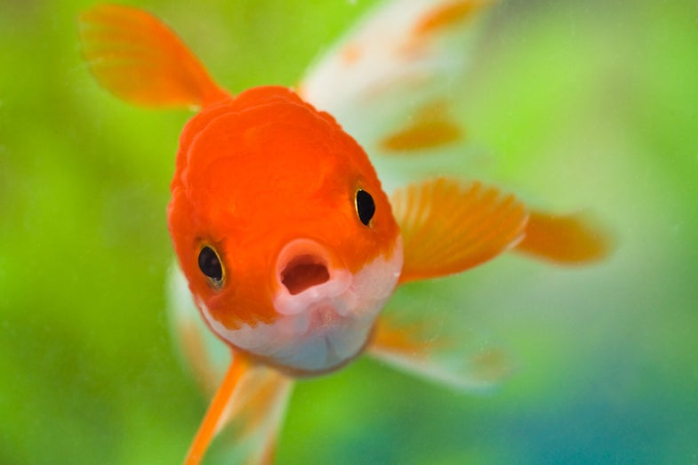 Fish got your teeth?