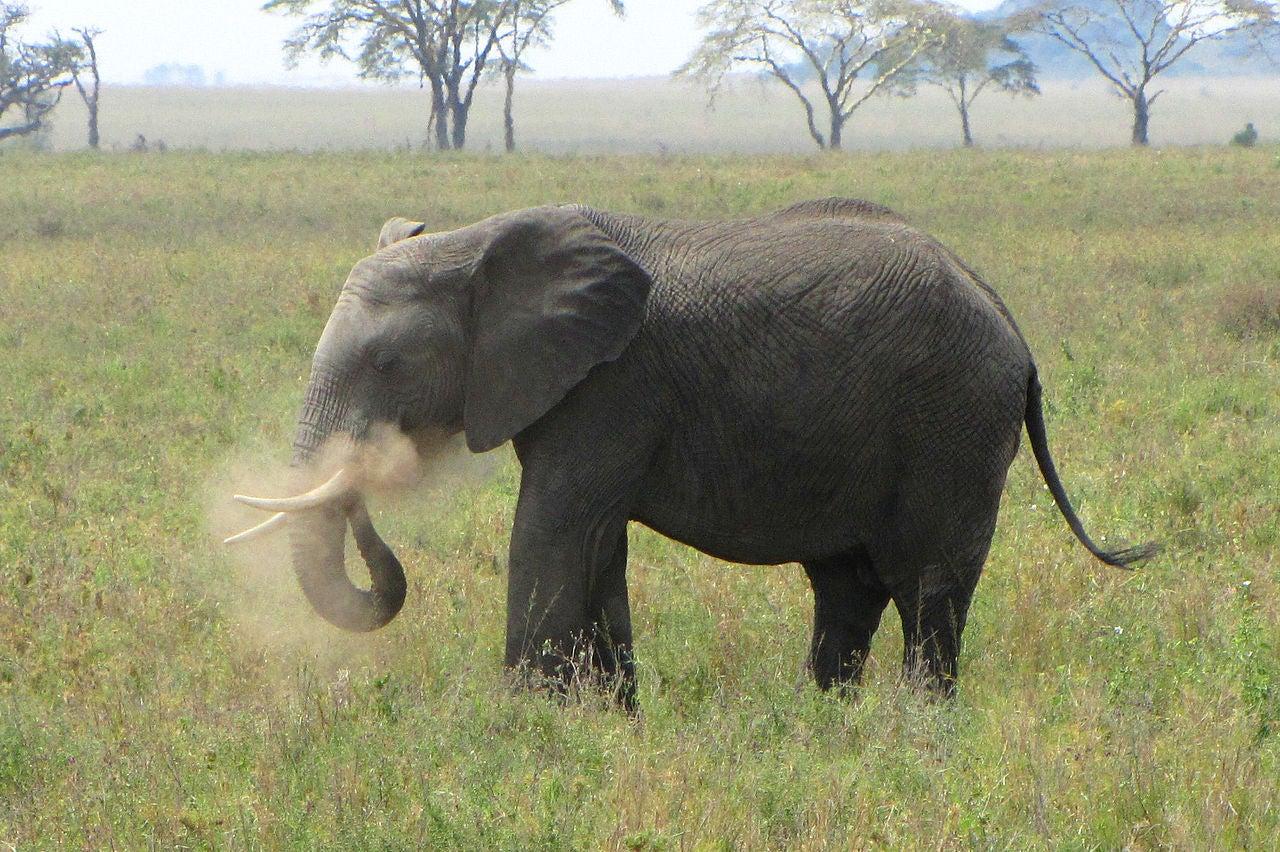 Elephants Hate Drones, Too