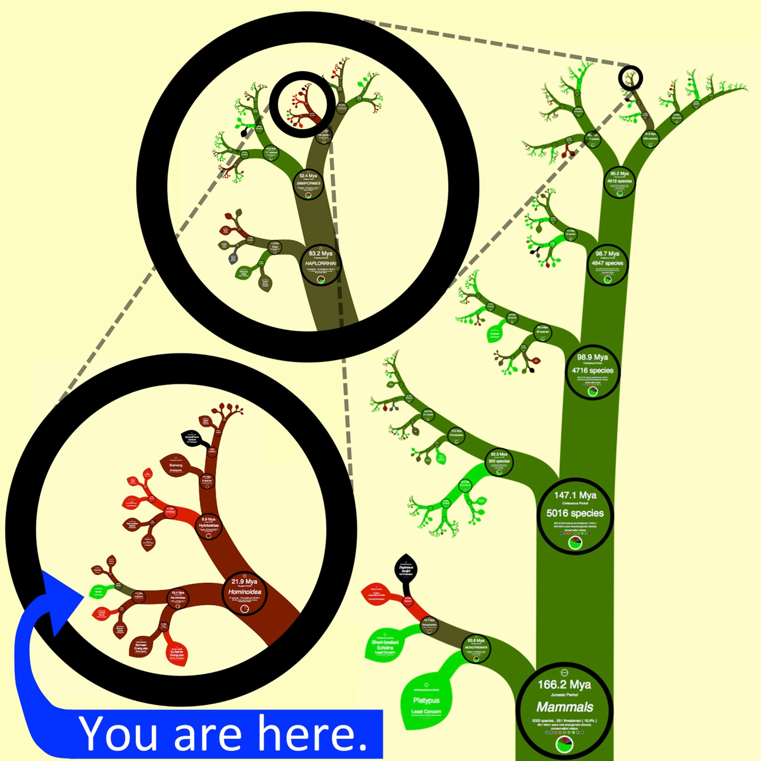 Interactive Fractal Tree of Life Zooms In On Earth's Entire Evolutionary History