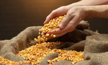 Ethanol is renewable, but that doesn't mean it's good for us