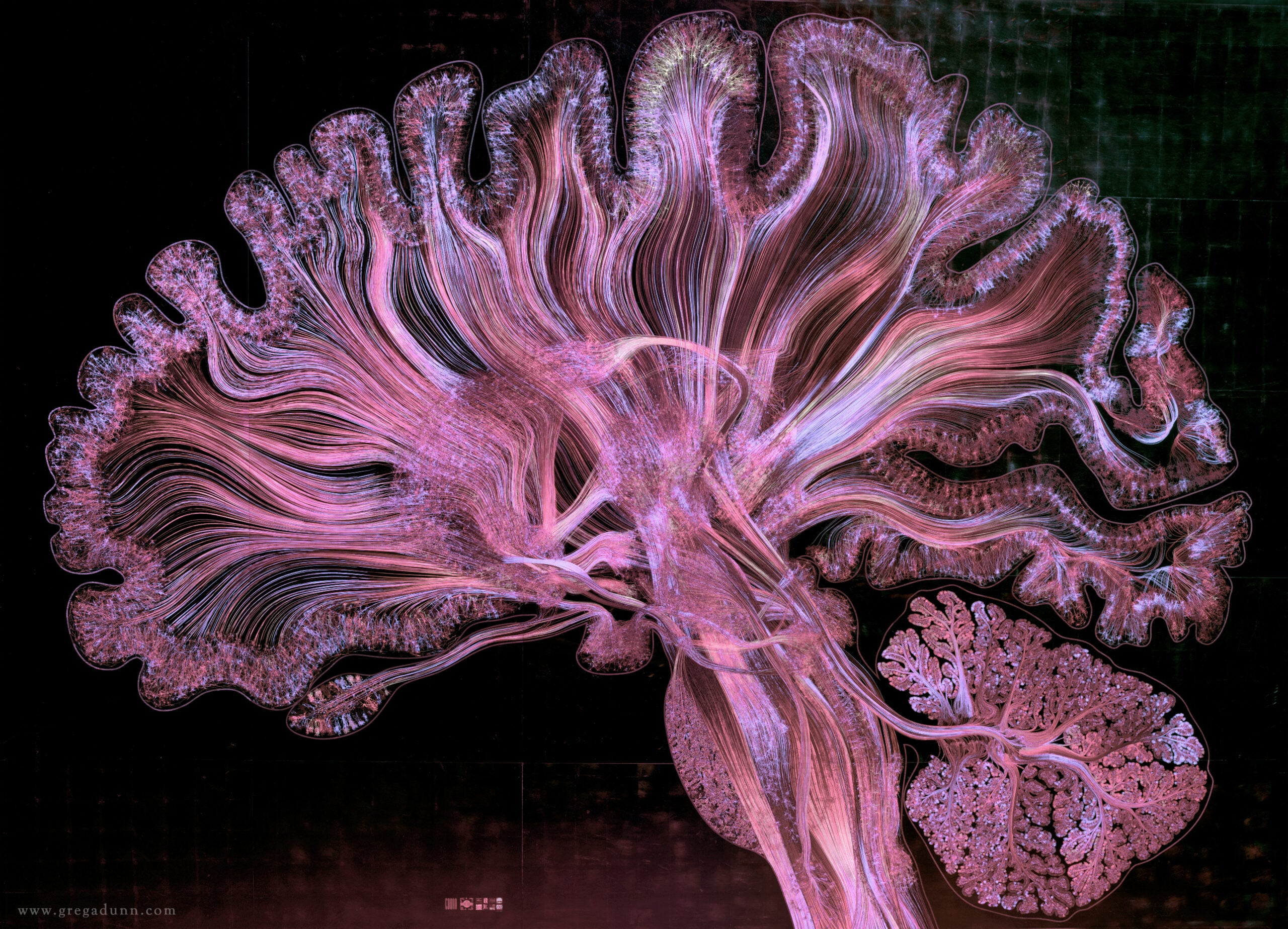 Human brain illustration | Vizzies winner
