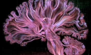 The 10 best science images, videos, and visualizations of the year