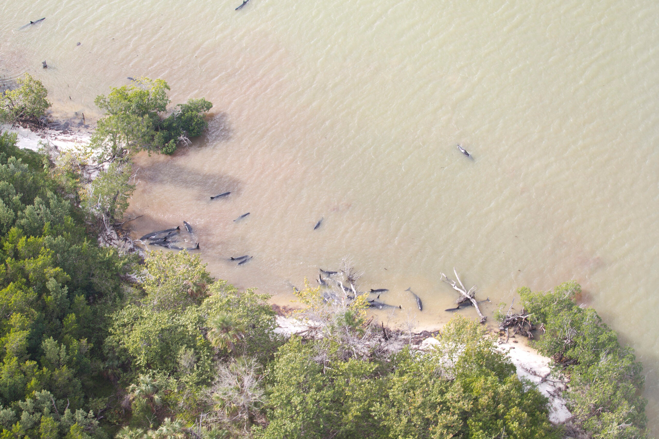 A mysterious stranding left nearly 100 dead dolphins off the coast of Florida