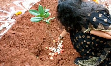 India Plants Nearly 50 Million Trees In Record-Breaking Effort