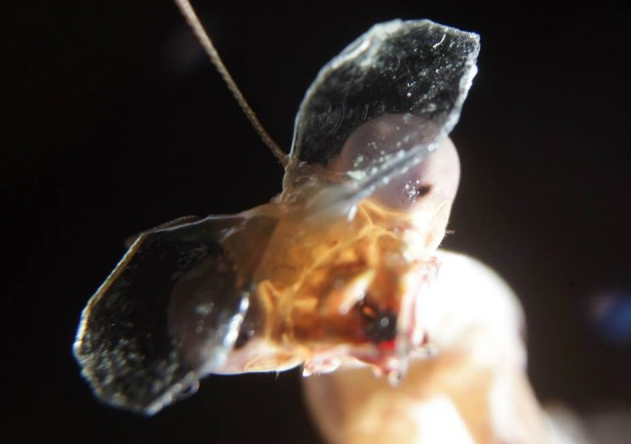 Why Researchers Are Putting 3-D Glasses On Praying Mantises