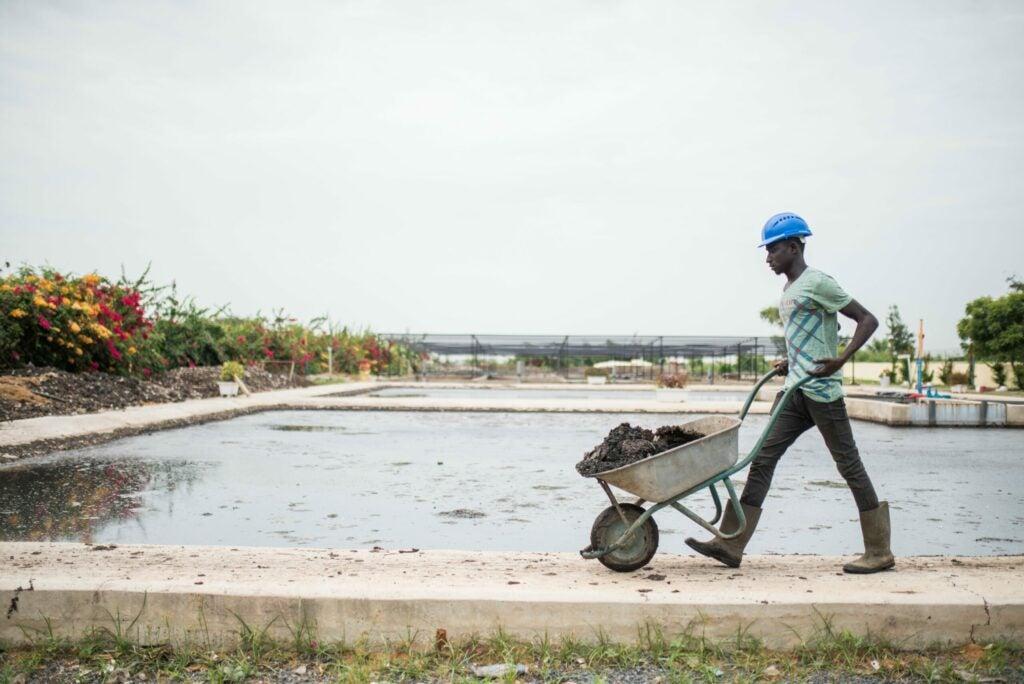Gates Foundation waste for composting