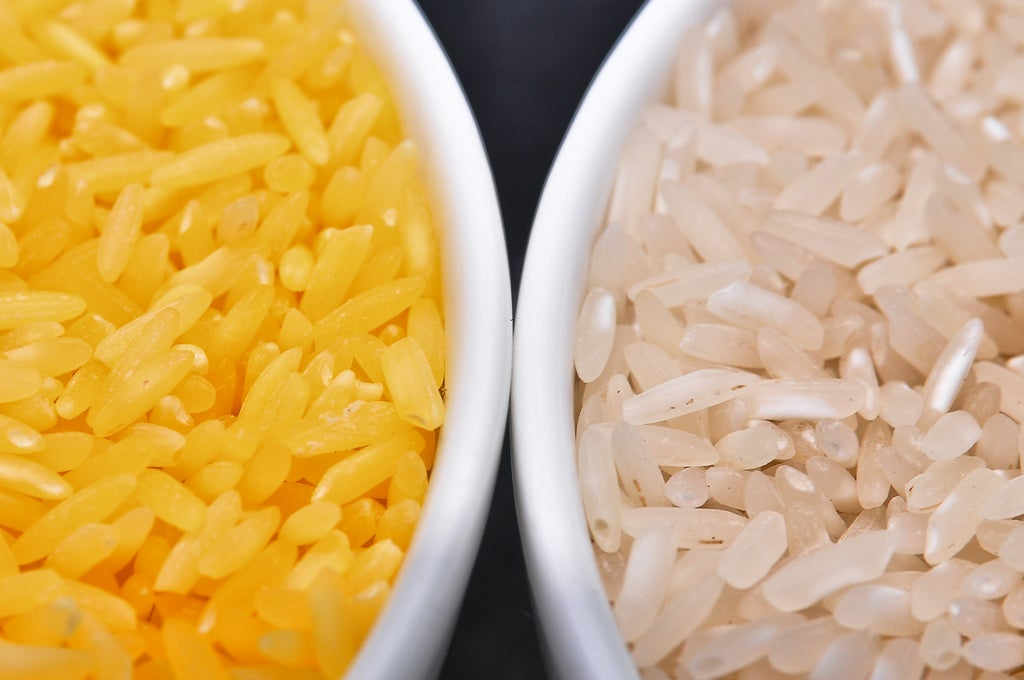 Engineered Golden Rice May Be Planted Soon In Philippines