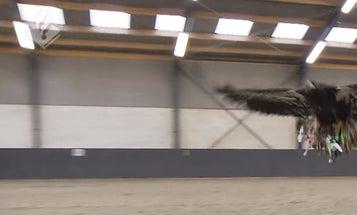 Dutch Anti-Drone Police Eagles Ready For Duty