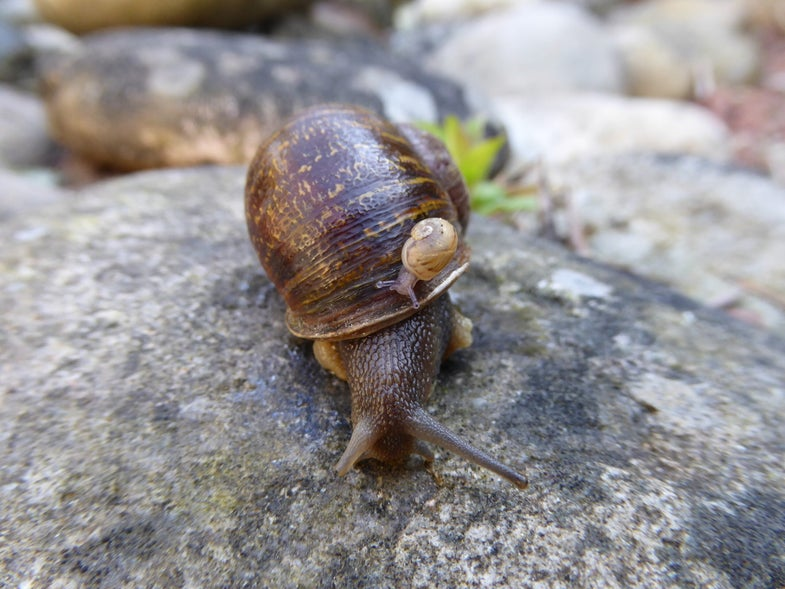 Jeremy the snail and baby