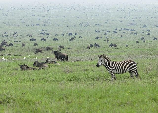 """Animal-Migration"