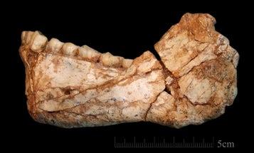 The oldest fossils of our species just got older