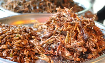 The Rise Of The Incredible Edible Insect