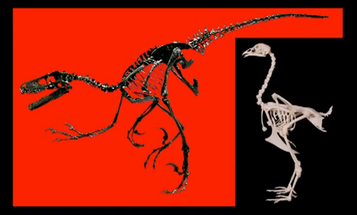 Video: How to Build a Dinosaur from a Chicken