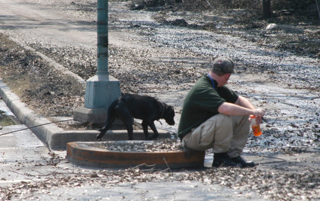 Stray dog approaching rescue worker after Hurricane Katrina