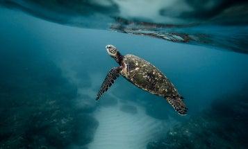 Hawaii is a hotspot for alien species