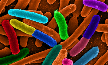 Telltale Bacteria From Criminals' Guts Could Crack Cases