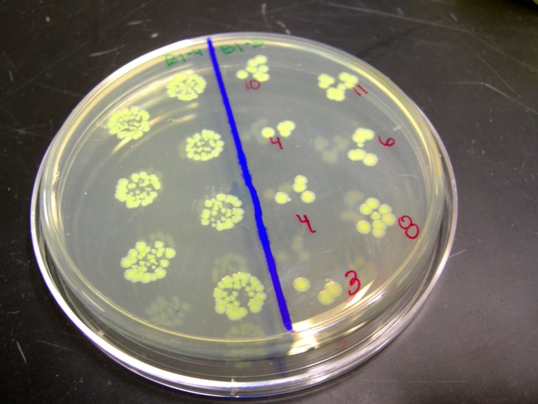 Mutant Bacteria Are Likely to Threaten Future Space Travelers