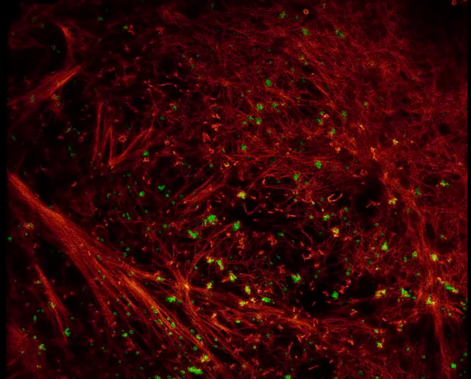 Watch The Inside Of A Cell Move In High Resolution