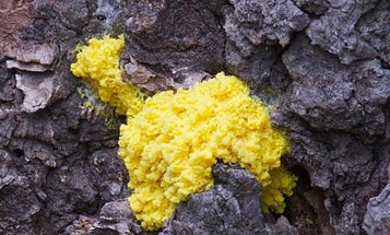 What slime mold and online shoppers have in common