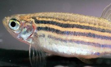 Bolder Fish Have Svelter Shapes