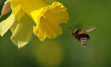 Scientists Chart The Lifetime Of A Bee In Flight Paths