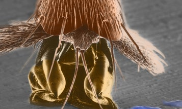 New Uncrawlable Material for Household Surfaces Gives Cockroaches the Slip