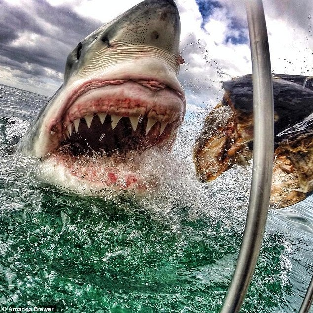 Toothy Sharks, Snake Robots, And Other Amazing Images Of The Week