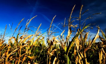 The Future of Cellulosic Ethanol is Green