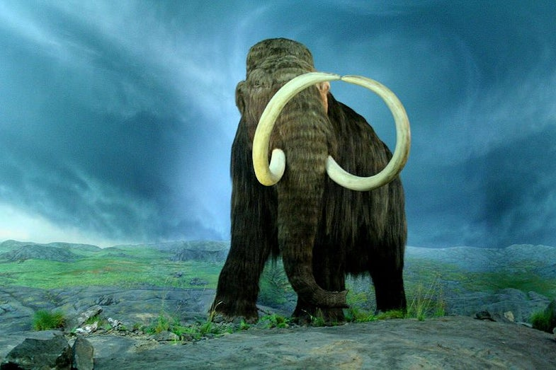 What Killed the Mammoths? Alien Nanodiamonds May Hold the Answer
