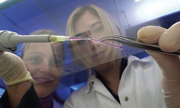 Germans Manufacture Artificial Blood Vessels With a 3-D Printer