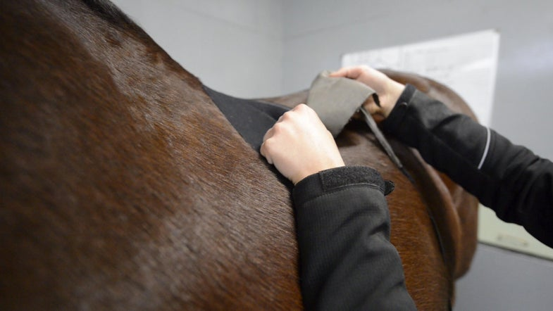 Sports Bras Could Save Horses' Lives