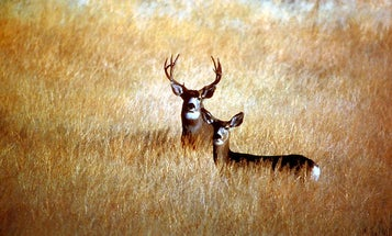 FYI: What Is Deer Antler Spray, And Why Would A Football Player Use It?