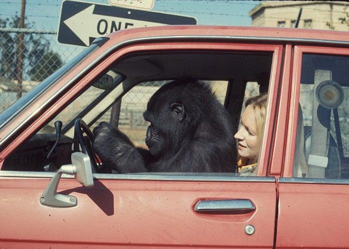 Koko in car