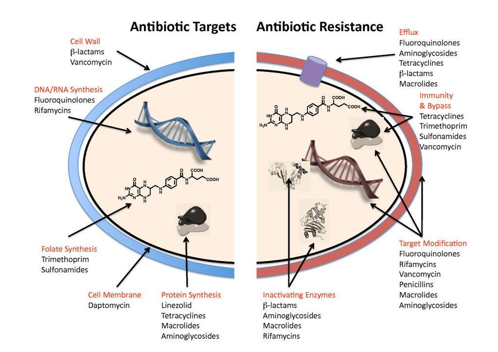 The various mechanisms behind antibiotic resistance