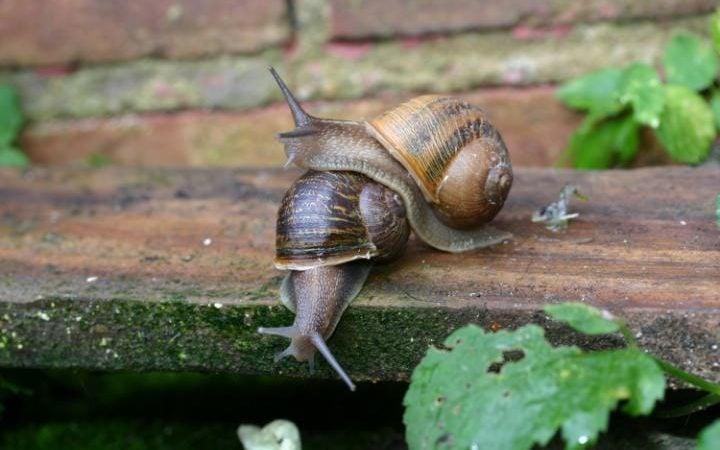 """""""snails"""""""