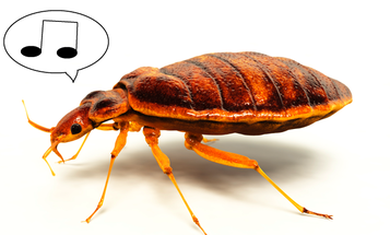 The Bed Bug: A Musical Muse