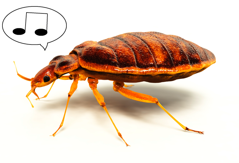 bed bug with musical notes
