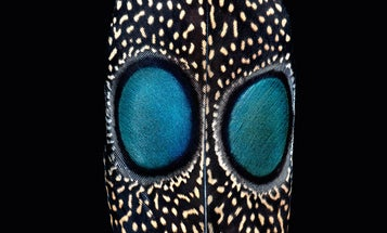 The Beauty And Function Of Feathers