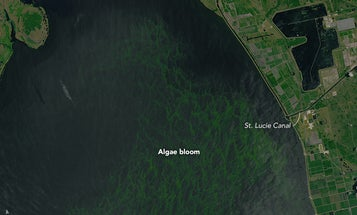 An Account of The Algal Affliction in Florida