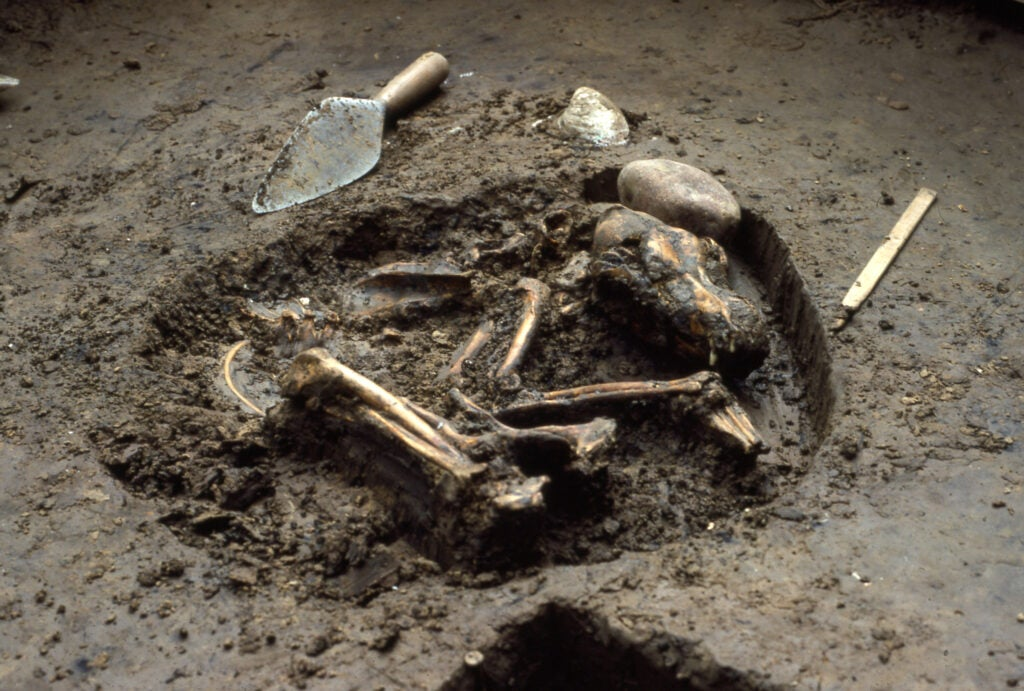 Dog grave from Koster site, 10,000 years old