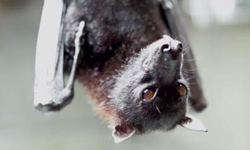 Watch Ben Affleck Talk About Saving Bats