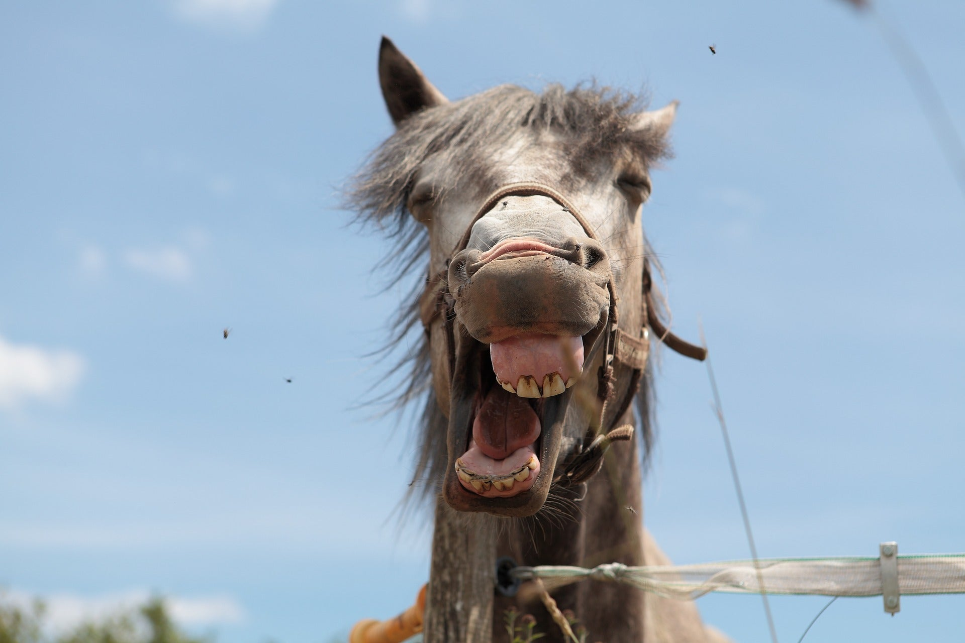 Now There's A Comprehensive Guide To Horses' Facial Expressions