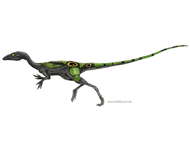 """Compsognathus"""