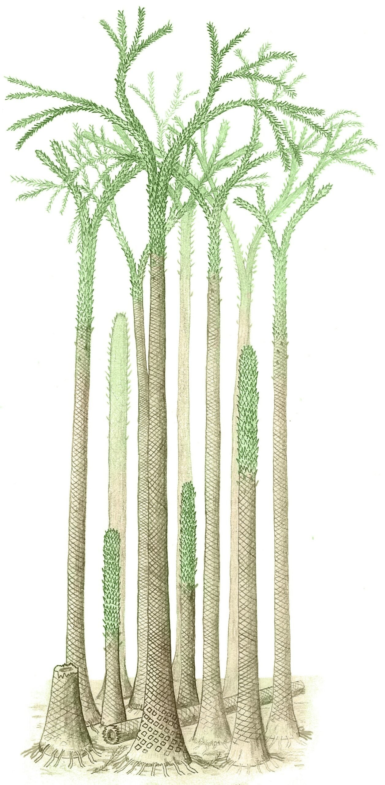 Trees in fossil forest