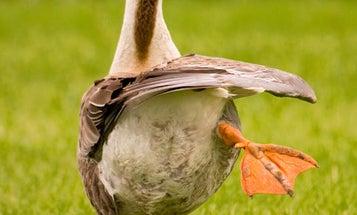 Is It True That Birds Can't Fart?