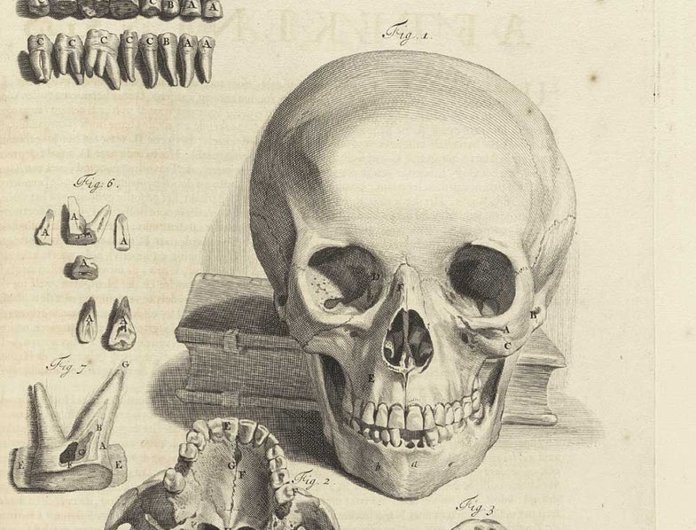 New Software Reads History From Skulls